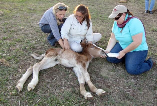 EMRT foal rescue
