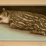 Ruhender Tapir2