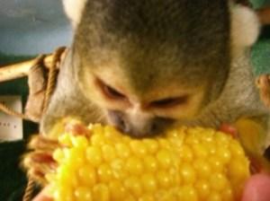 My Son Eating Corn
