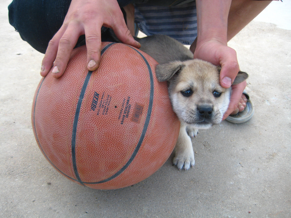 basketball puppies photo