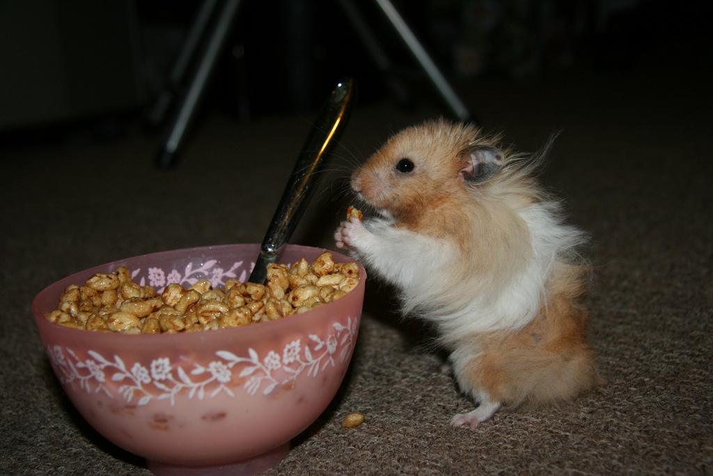 teddy bear hamster photo