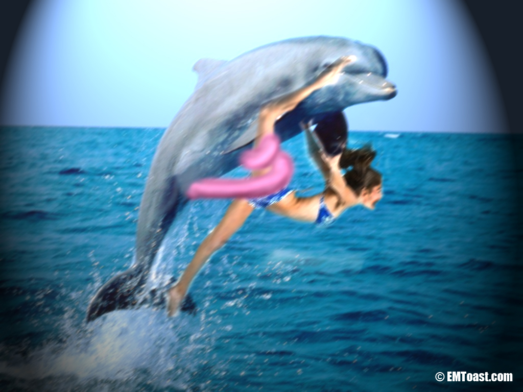 Attacks Humans Dolphin Sexually On