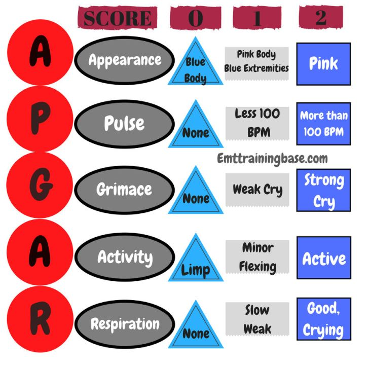 APGAR Score Infographic