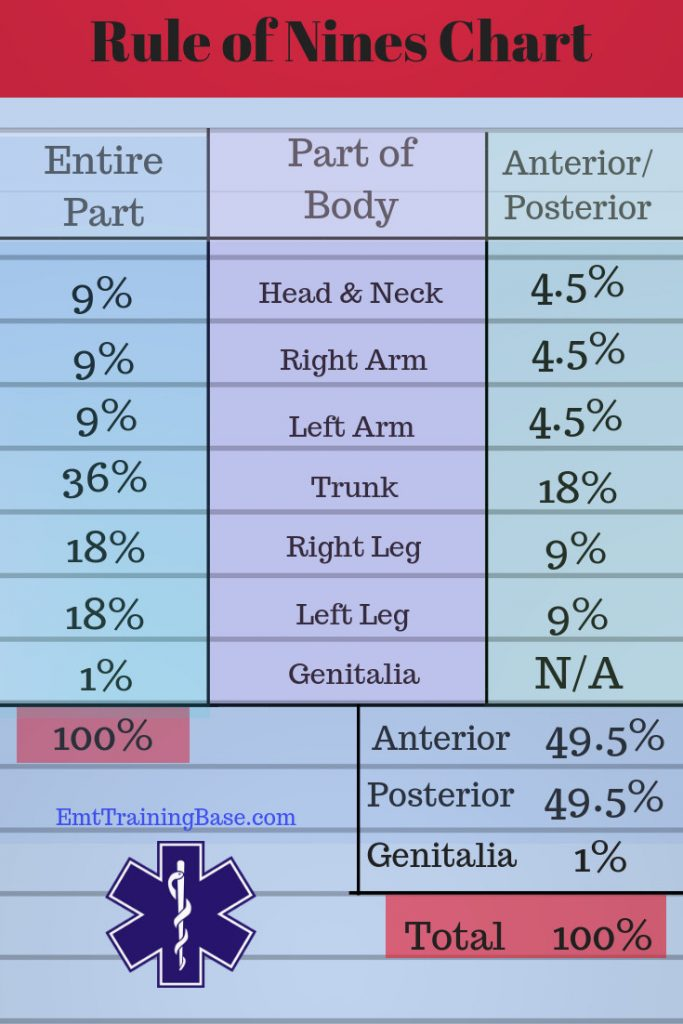 Rule of Nines Chart Adult
