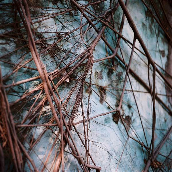 """Growth"" - Lomography Color Negative 400 at EI 400."