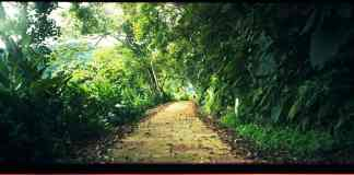 Walk your path - Kodak Portra 400 shot at ISO400
