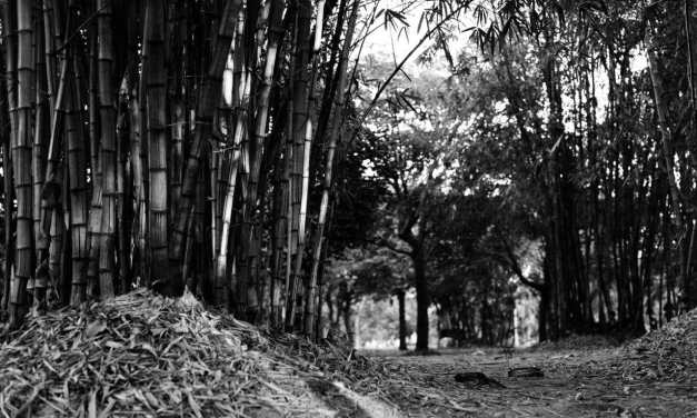 Bamboo Glade #01 – Shot on ILFORD HP5 PLUS at EI 800 (120 format)