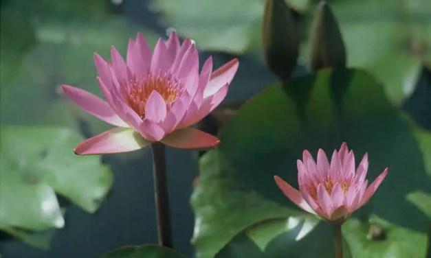 Lotus-es – Shot on Wittner Chrome 200 / Agfa RSX at EI 200 (35mm format)