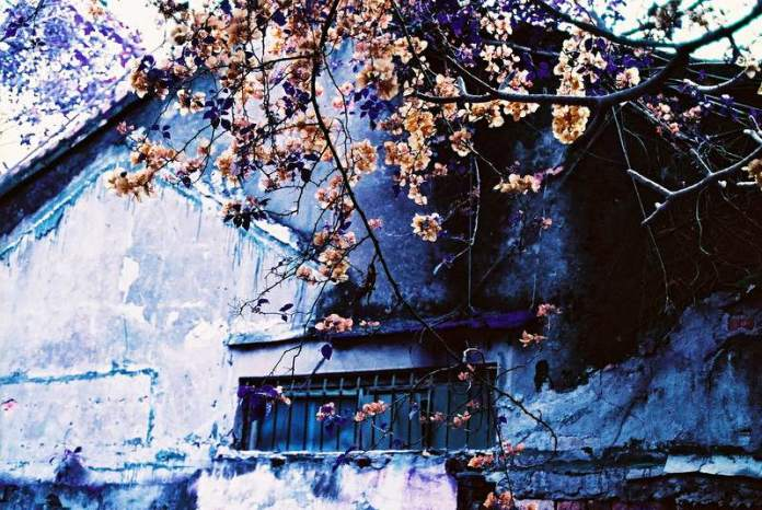 Final Spring - LomoChrome Purple XR100-400 shot at EI 200. Speciality color negative film in 35mm format. Orange filter, overexposed one stop.