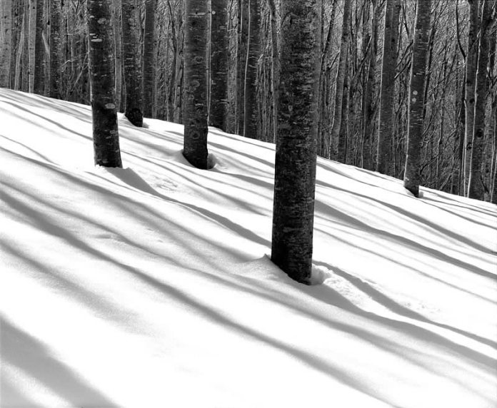 Snowy forest. Pentax 67II Pentax 55mm f4 T-MAX 100 — Appennino Tosco Emiliano, Italy