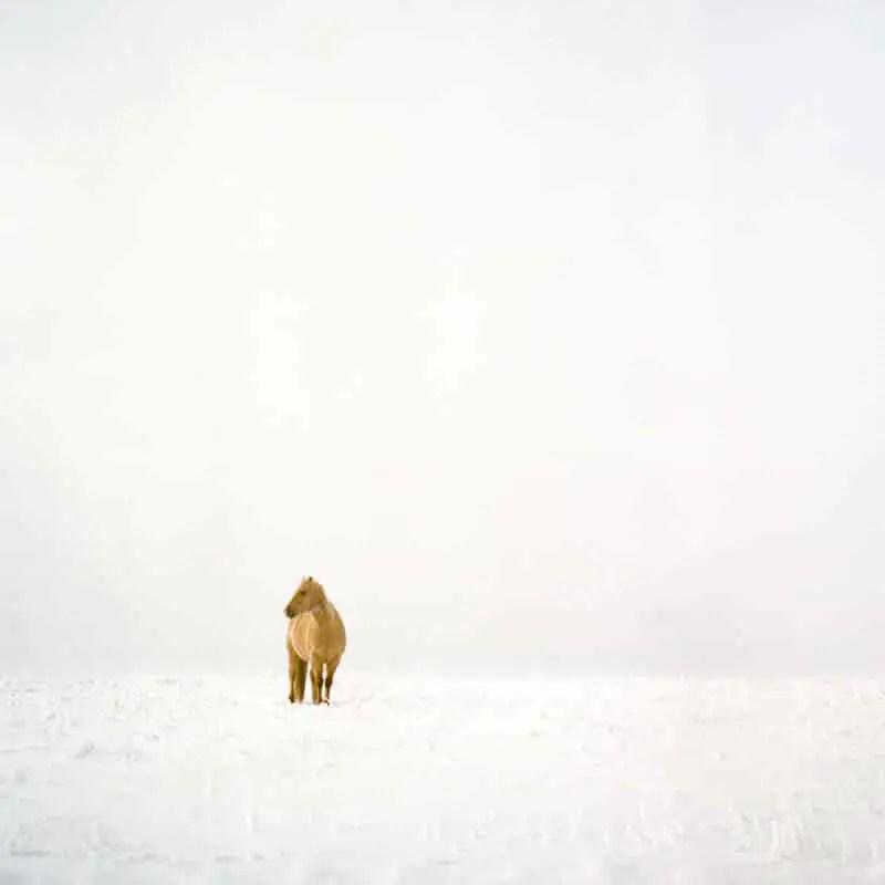 """Prairie Livin'"", Southern Alberta - Rolleiflex 3.5F | Kodak Portra 400"