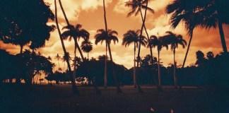 Ochre Palms - Lomo Redscale 100