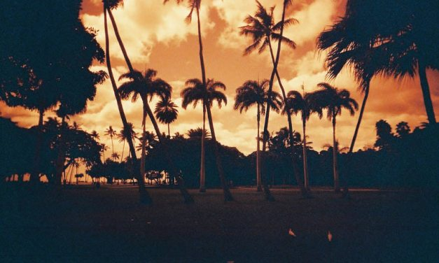 Ochre palms – Shot on Lomography Redscale 100 at EI 100 (35mm format)