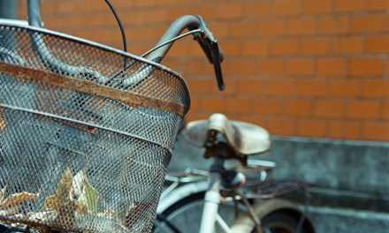 Basket case – Shot on Kodak VISION3 250D 5207 at EI 250 (35mm format)