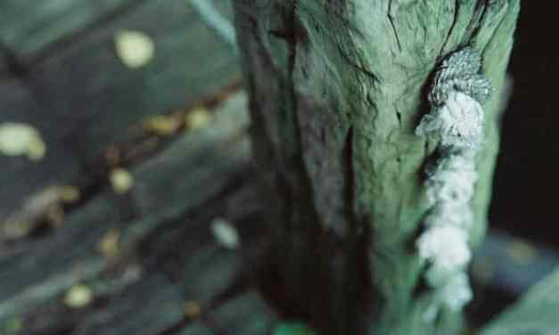 Knotty post – Shot on Kodak VISION3 250D 5207 at EI 250 (35mm format)