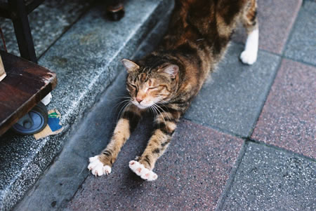 ….and stretch – Shot on Kodak VISION3 250D 5207 at EI 250 (35mm format)