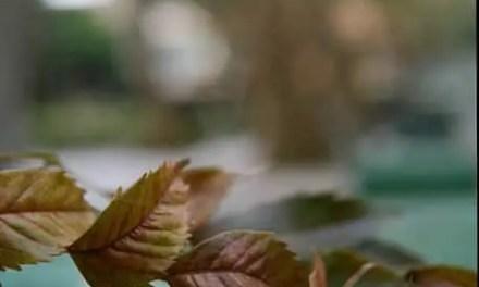 Autumn unfurled – Kodak Portra 400 (120)