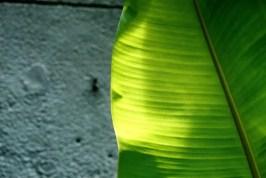 Leaf-ed - AgfaPhoto Vista 200 - Leica M6, Canon 50/1.5