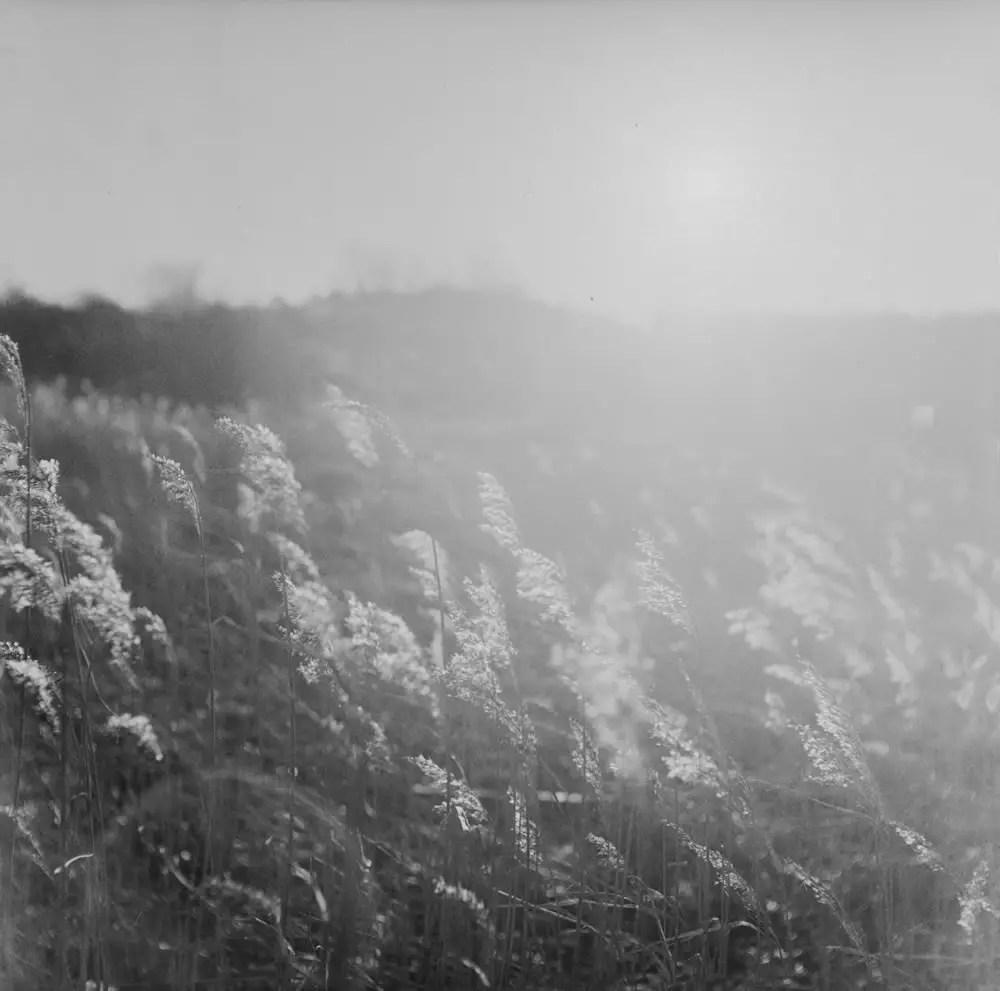 Sunny January Day - Kodak T-MAX 400