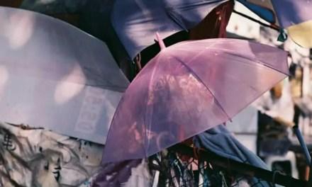 Dappled – Shot on Mitsubishi 100 Color at EI 100 (35mm format)