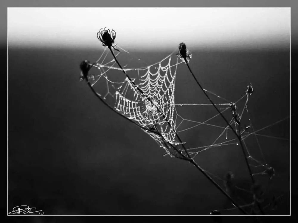 Spider Web (Mamiya 645, Kodak 320TXP)