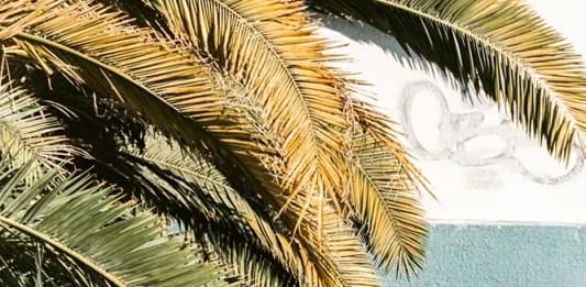 Kodak 50D (5203) - C41 cross process with bleach bypass - Crawling Palm Tree
