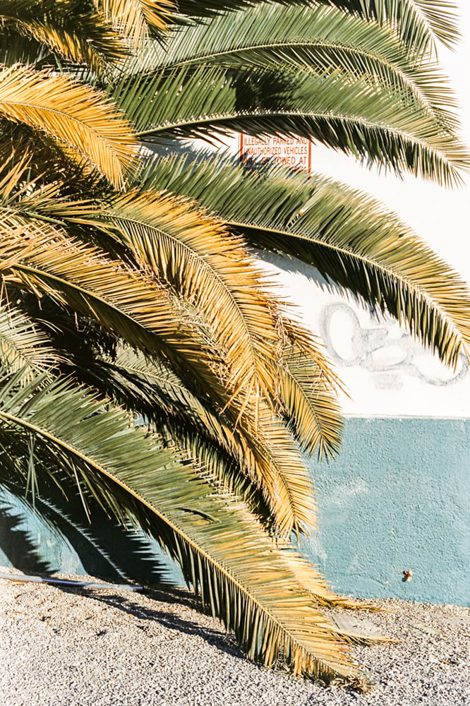 Kodak 250D (5207) – C41 cross process – Crawling Palm Tree