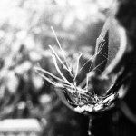 2016-06-24 - What is it? - Eastman Double-X 5222 shot at EI 800. Black and white film in 35mm format. Push processed 1+2/3 stops.