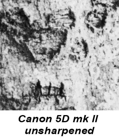 Scanning film: Canon 5D Mark II vs Drum scanner vs Epson