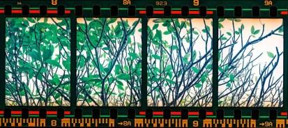 2016-07-07 - Quadriptych - Fujicolor Industrial 400 shot at EI 400. 35mm color negative film shot as half frame.