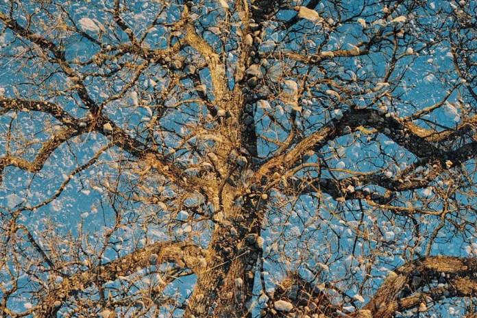 Road and tree, Double-X, Nikon F100, Kodak Color Plus