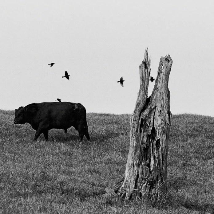 Tree Tomb Gathering, Nikon F4, Ilford HP5+