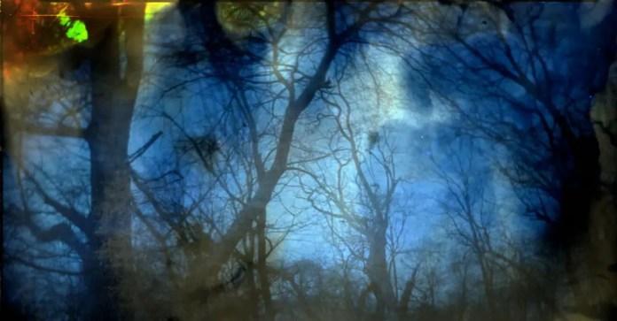 Dektol Soaked Retina print (AS-IS, not tinted) - Trees - John Nanian