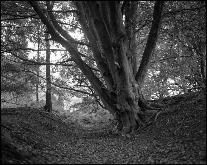 Adi Taylor - @viewfinder_m6 - Ancient trackway. Pentax 6x7 & 110mm.