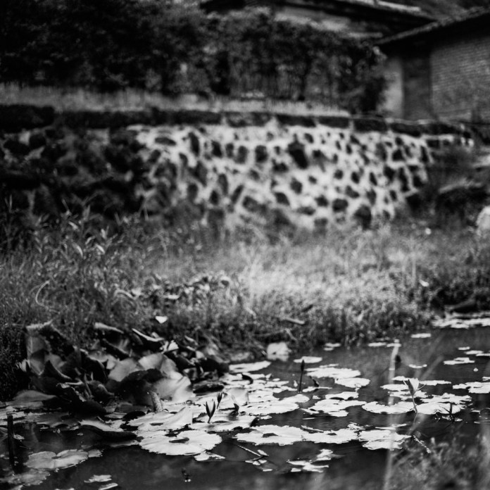 Late bloomer - Ilford Pan F+ shot at EI 800.  Black and white negative film in 120 format shot as 6x6.  Push processed 4 stops.