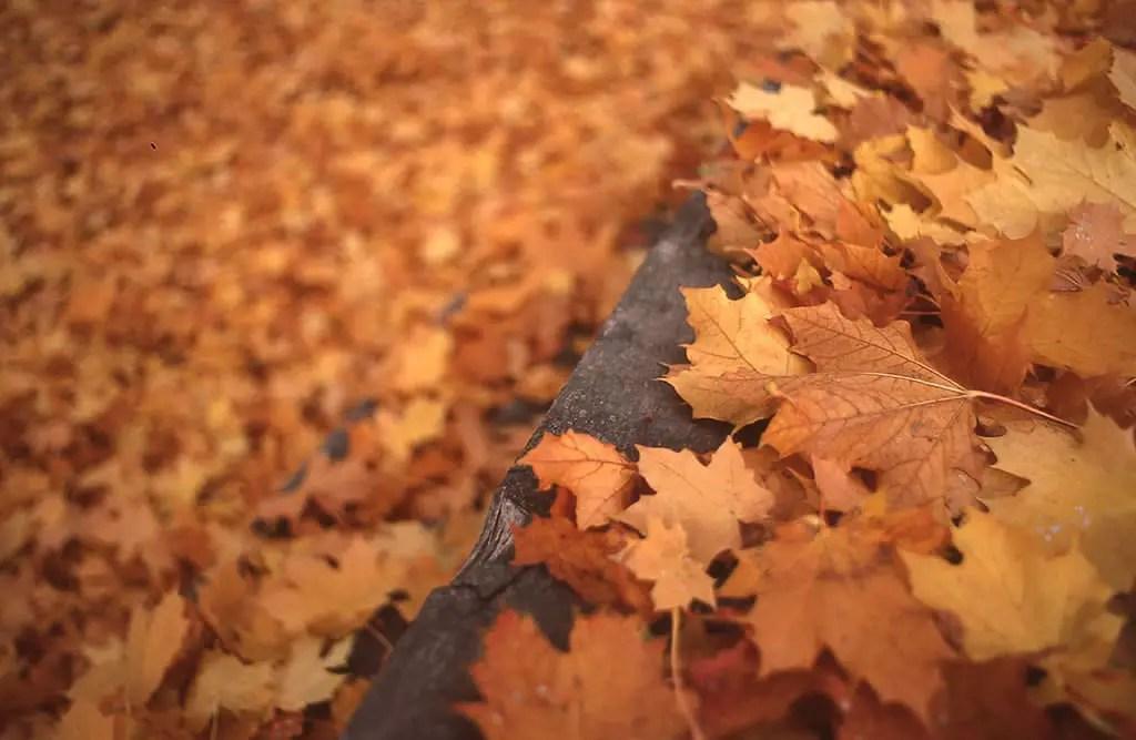 Kalispell in October - Pentax K1000 - Velvia 50