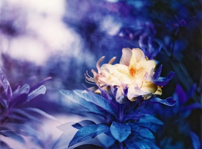 Drunk - Lomochrome Turquoise XR 100-400 shot at EI 50. Color negative film in 120 format shot as 6x6.