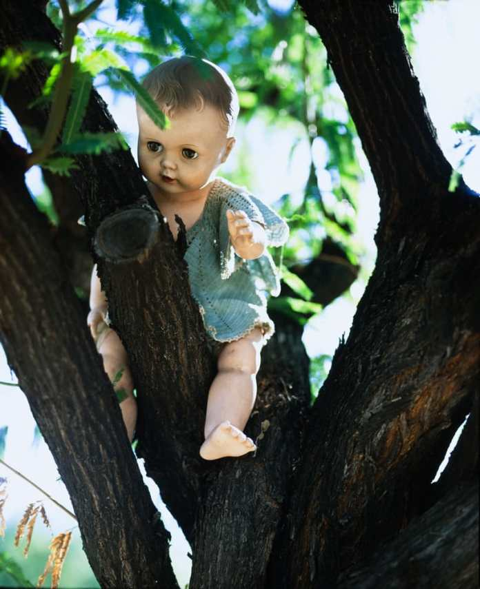 Creepy Doll in Mesquite Tree, Mamiya RB67, 127mm 3.5KL, Fuji Velvia 50