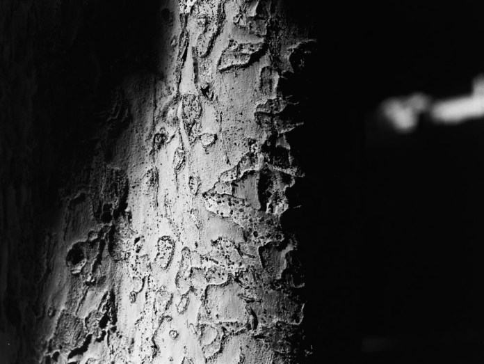 Scarred - Ilford HP5+ shot at EI 1000. Black and white negative film in 120 format. shot as 6x4.5. Push processed 1+1/3 stops.