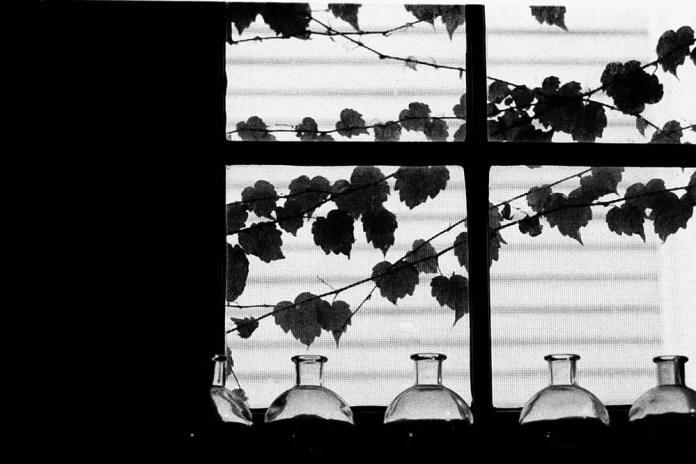 Bottles and Leaves - Exakta Varex IIb - Ilford HP5+ - Zeiss Flektagon 35mm