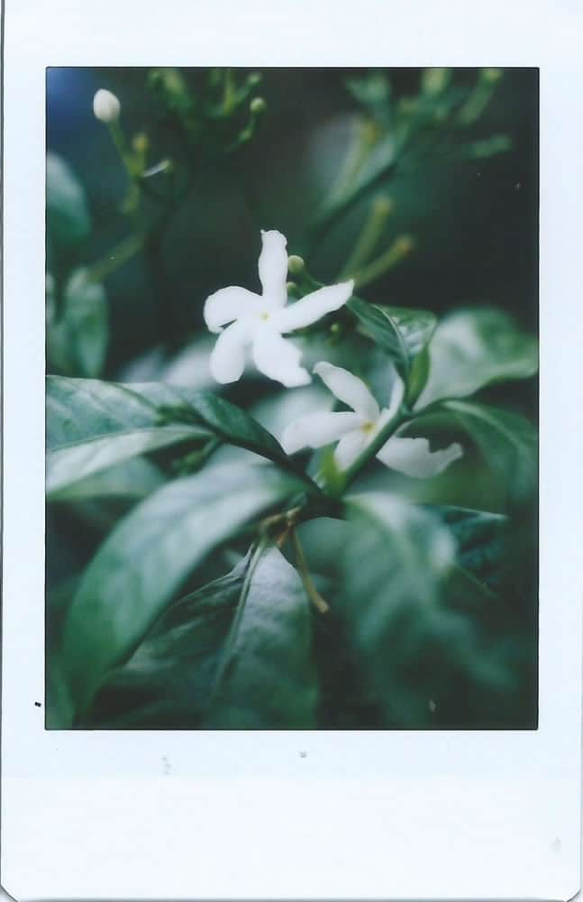 We were amazed at the depth of field and clarity that the Mamiya C33 produces; just look at how sharp the photo of the flower is!