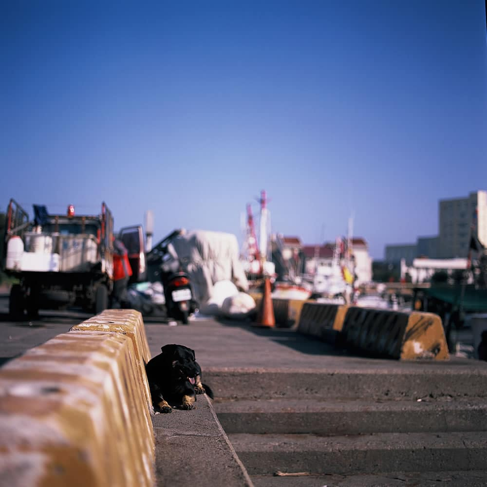 Chillin' - Fuji Provia 100F (RDP III) shot at EI 100. Color reversal (slide) film in 120 format shot as 6x6.