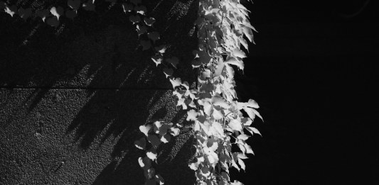 Straight down - JCH Streetpan 400 shot at EI 12. Black and white negative film in 35mm format. R72 720nm filter.