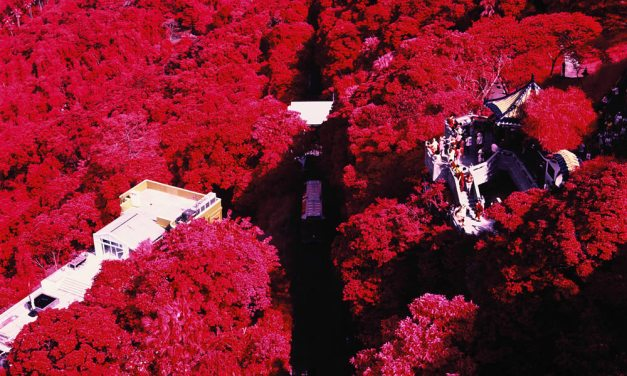 Vernicular rising – Shot on Kodak AEROCHROME III 1443 (120)