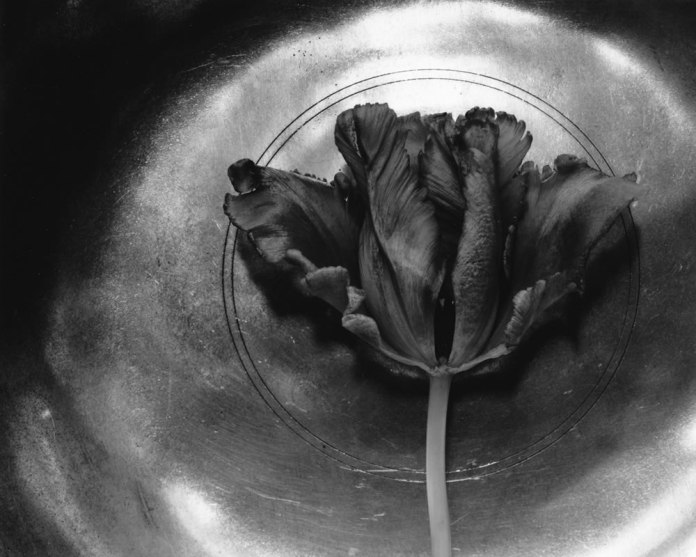 Tulip and Bowl - 4x5 field camera