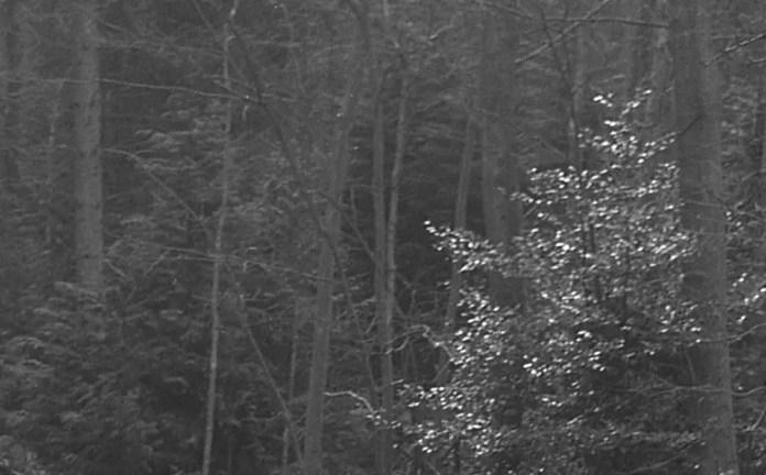 Kodak T-MAX 400 (120) - 20c, 1+4, 8 minutes and 08 seconds