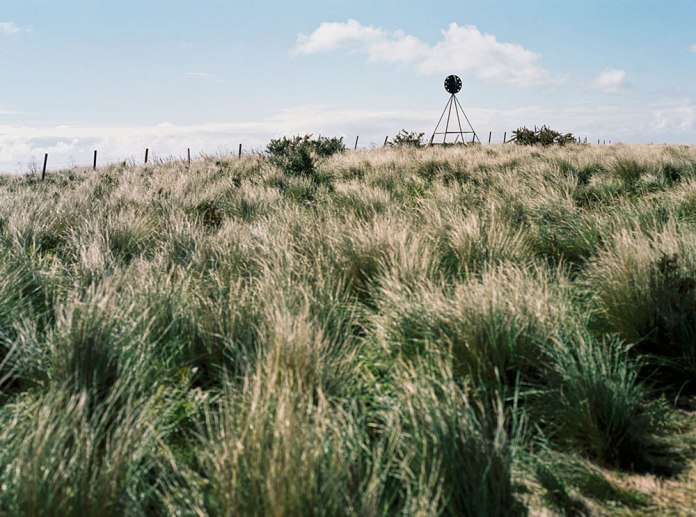 Tasmania Travelogue - Bunch grass, wallabies and astounding views can be had on The Nut.