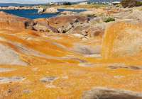 Tasmania Travelogue - The bright lichen of Bay of Fires.