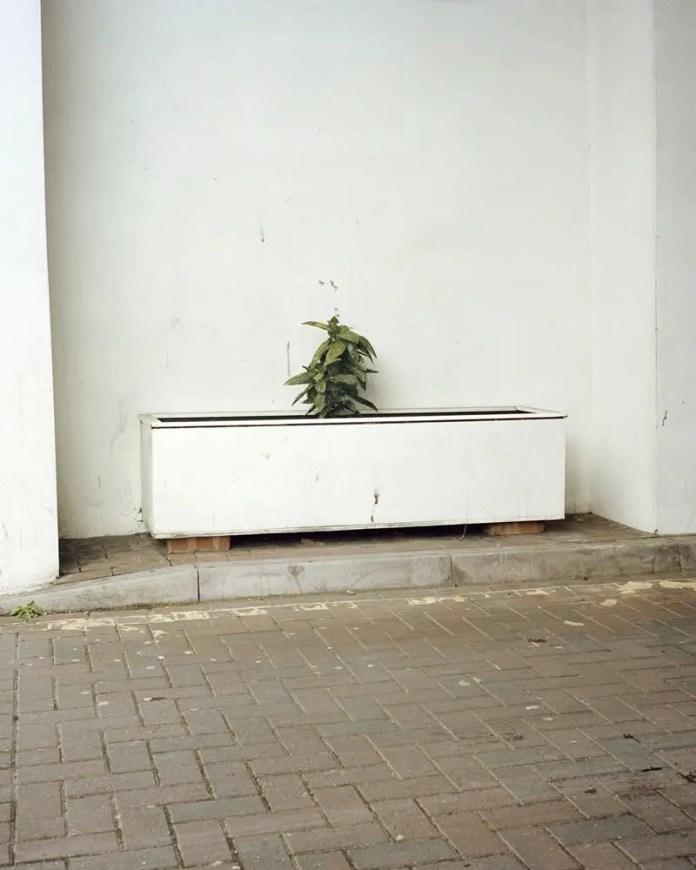 Planter in a Driveway, Kodak Portra 400, Rolleiflex T, High Barnet