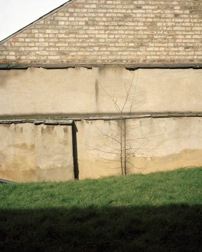 Tree Against a Wall, Kodak Portra 400, Highgate